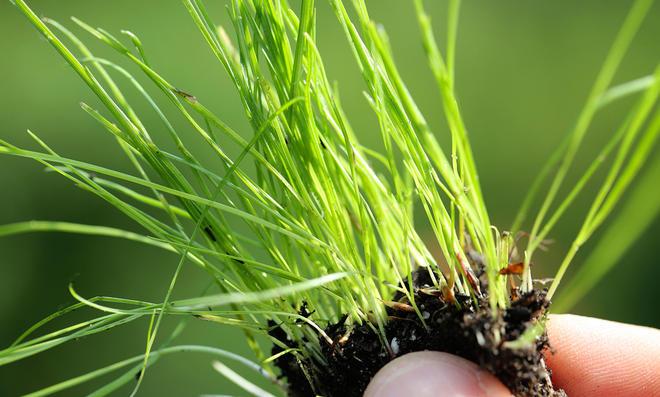 Rasen sanden