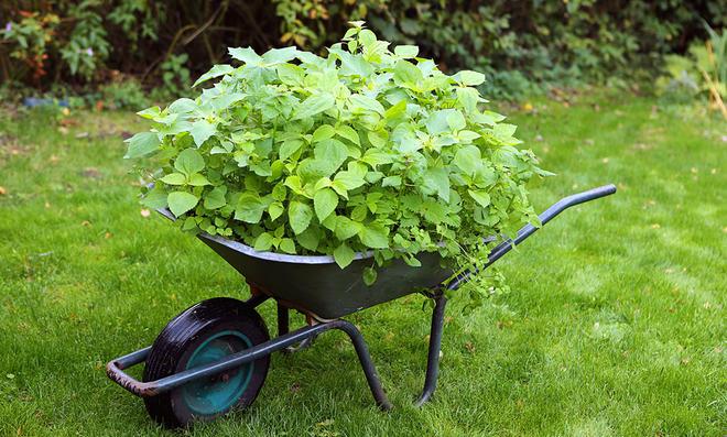 Kompost für den Rasen