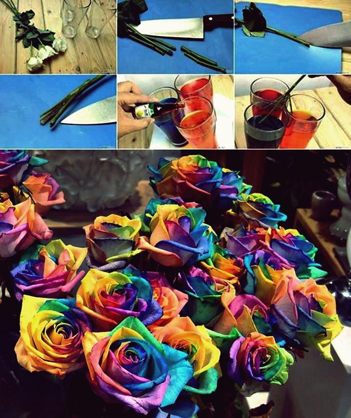 DIY echte Regenbogen Rosen