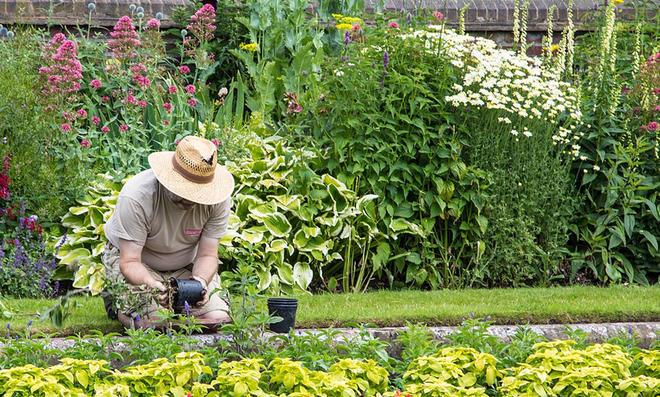 Gärtnertipps