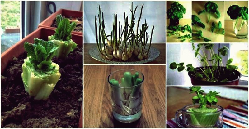 13 Gemüse, das Sie immer wieder nachwachsen können