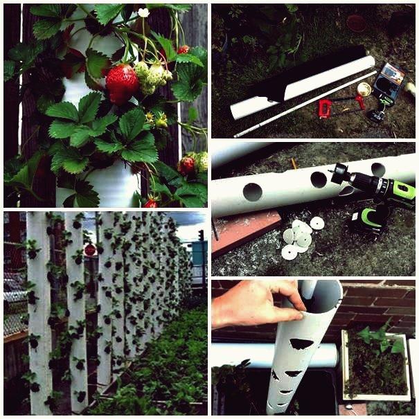 DIY Erdbeerturm aus PVC-Rohr