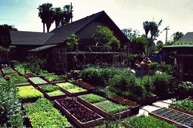 Erfahren Sie, wie Sie auf nur 1/10-Morgen-Land über 6000 Pfund Lebensmittel pro Jahr anbauen können