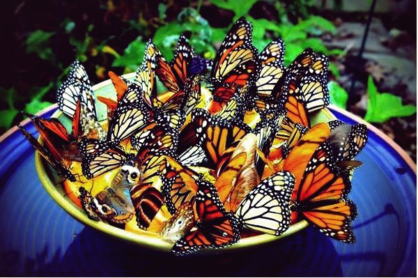 Kreative Ideen - DIY Amazing Butterfly Feeder