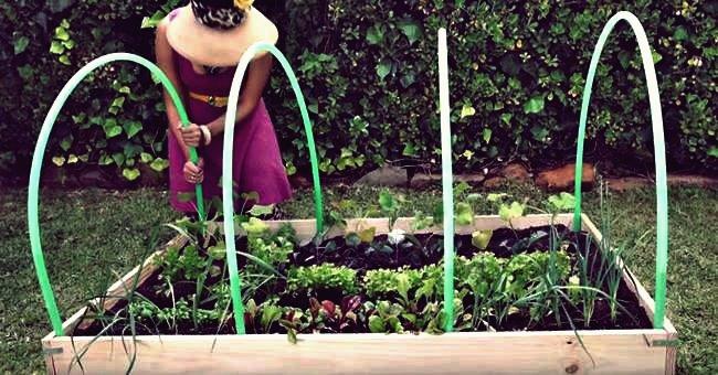 Kreative Ideen - DIY Easy Greenhouse