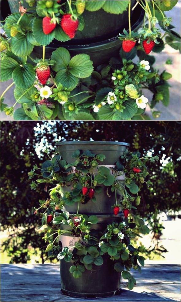 Kreative Ideen - DIY Erdbeerturm Mit Reservoir