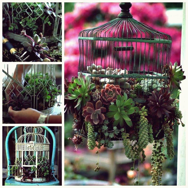 Kreative Ideen - DIY Vogelkäfig Sukkulenten Pflanzer