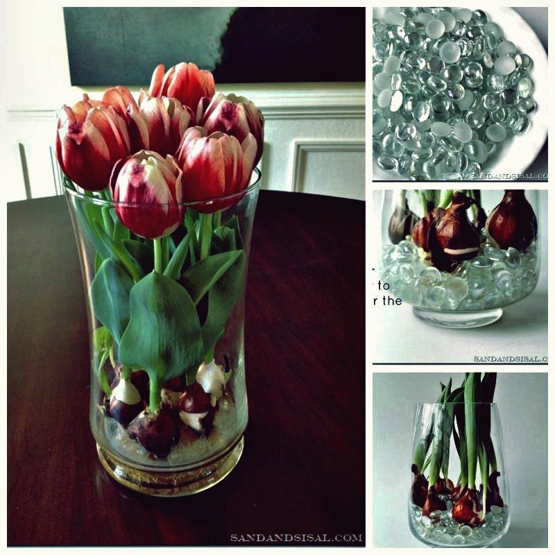 Kreative Ideen - Wie Tulpen drinnen wachsen